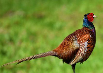 Uitvoeringsplan Boerenlandvogels Drenthe